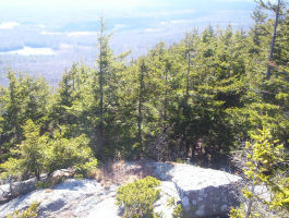 View from Thoreau Rock (Monadnock State Park)